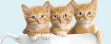 1 марта - Международный день кошек
